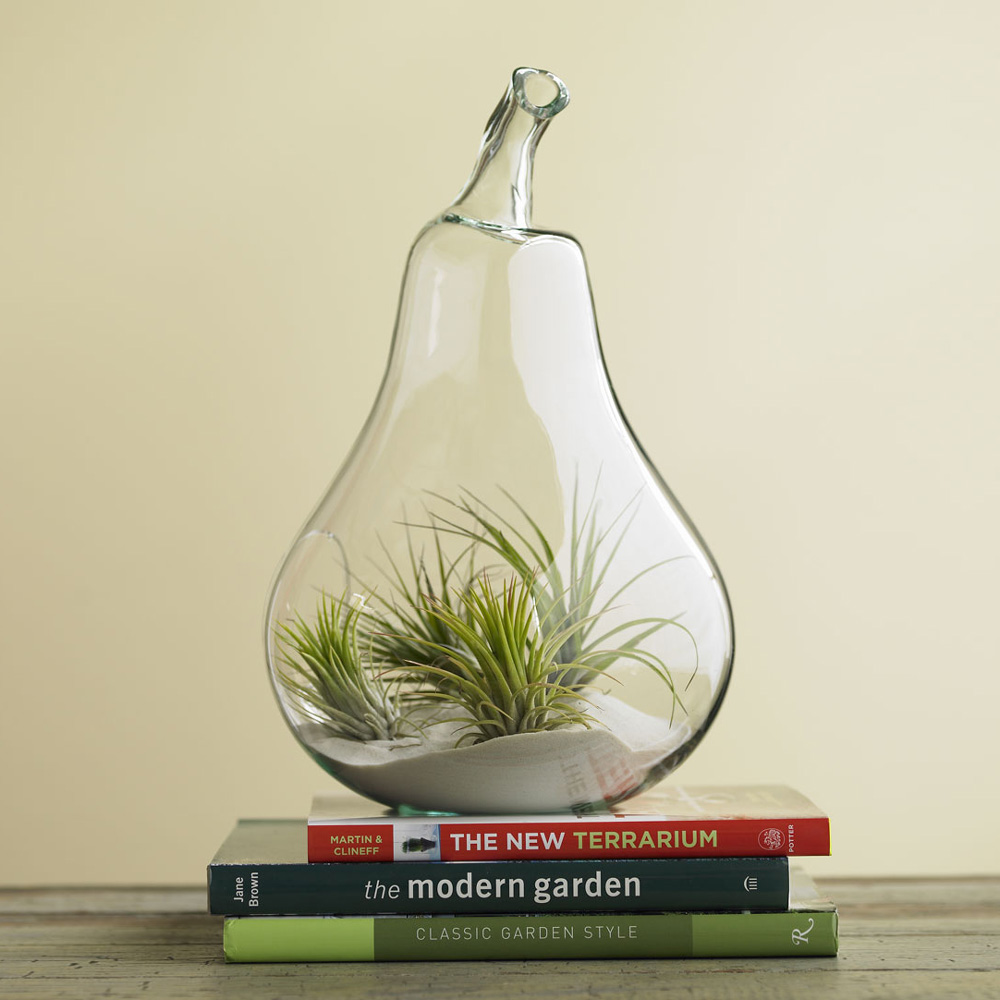 Air Plant Terrariums The Green Head