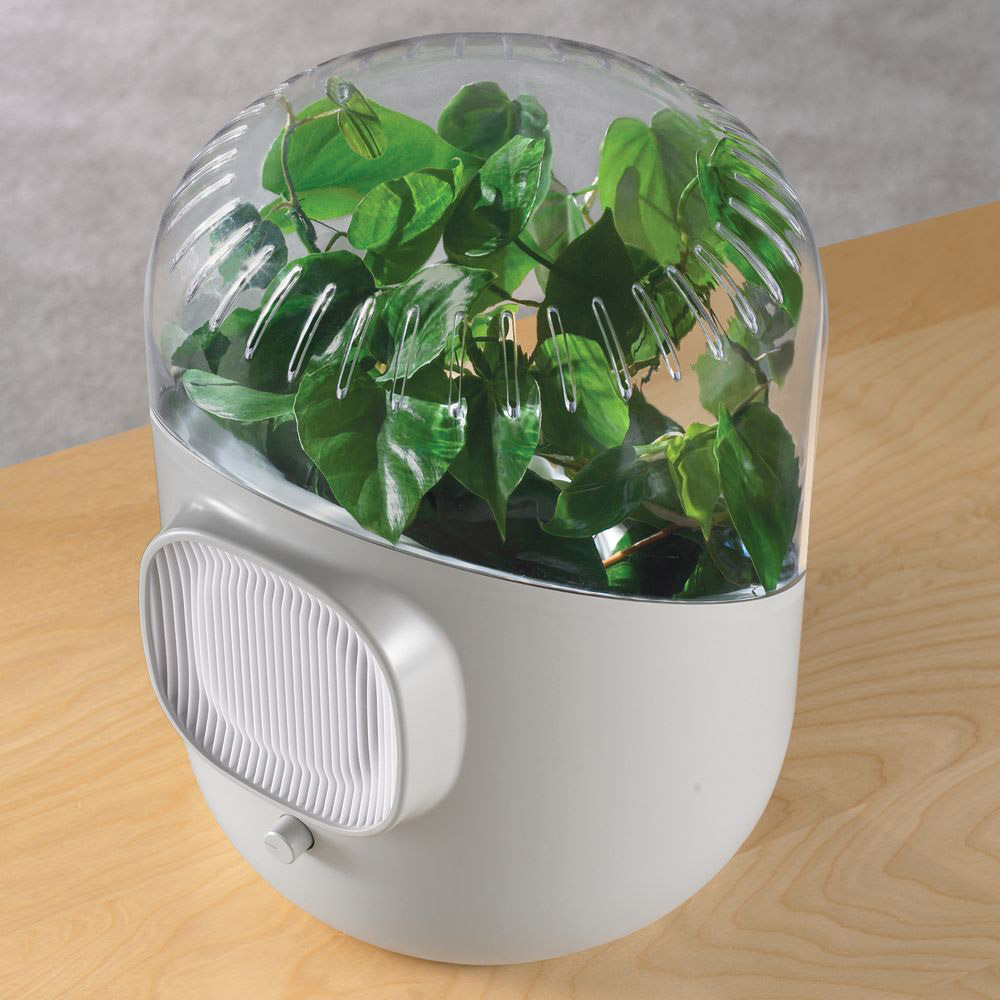 Andrea - Plant-Powered Air Purifier - The Green Head