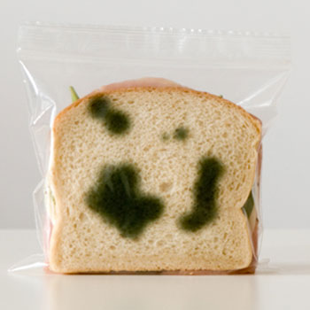 anti theft lunch bags the green