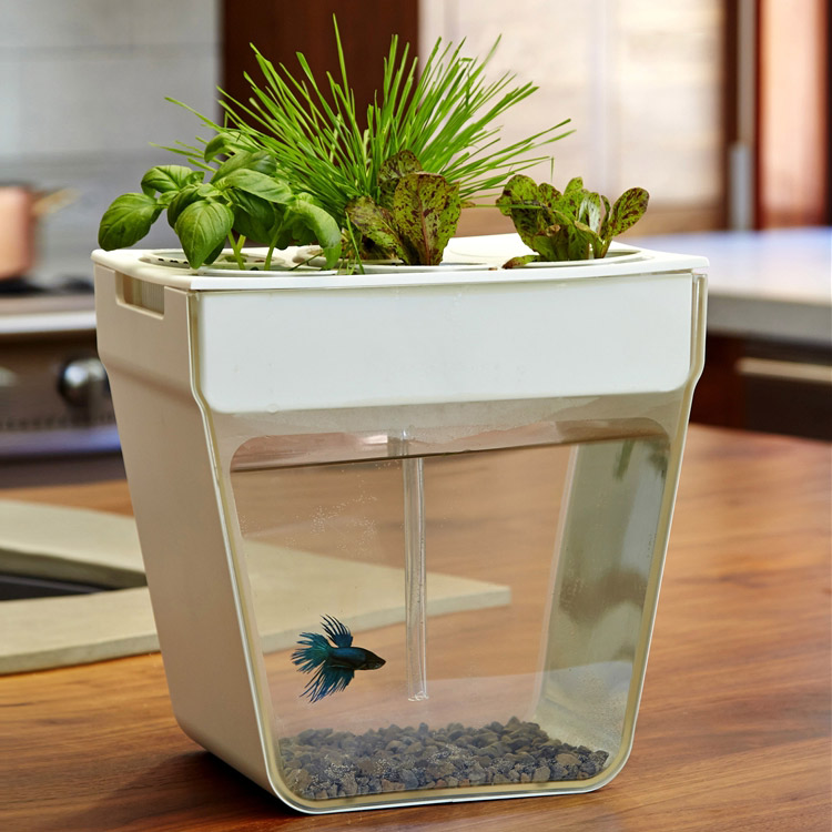 Aquafarm aquaponic garden and self cleaning aquarium for Self cleaning betta fish tank