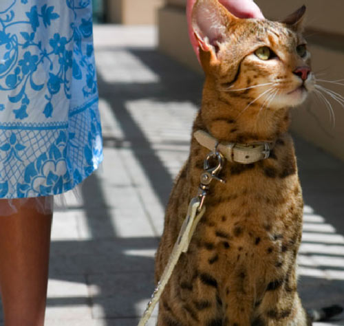 washington animal control