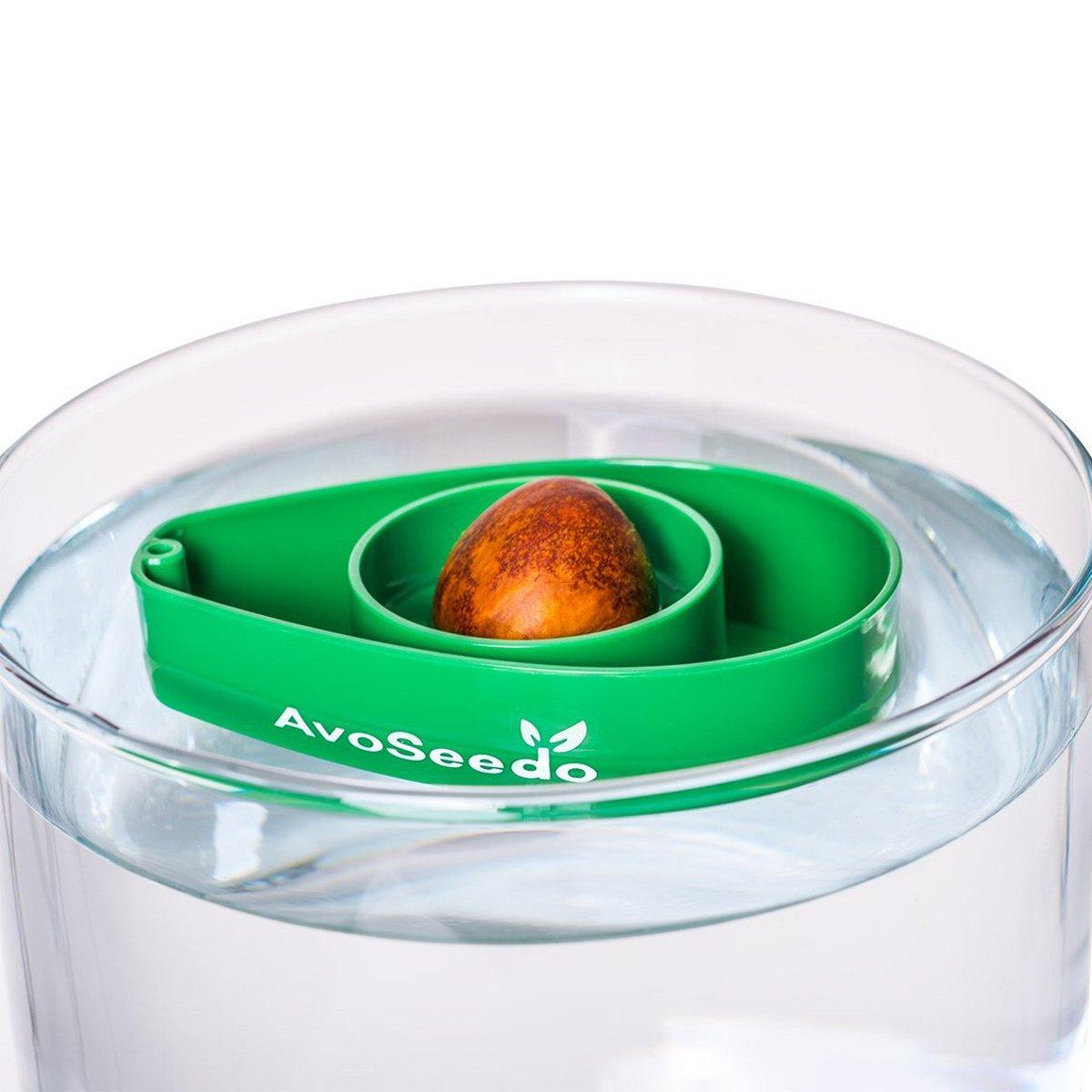 Avoseedo grow your own avocado tree the green head for Grow your own avocado tree from seed