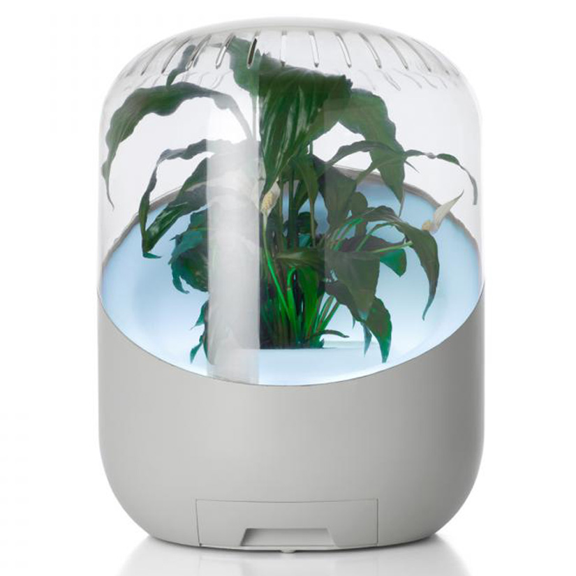 Bel air plant powered living air filter the green head for Air filtering plants