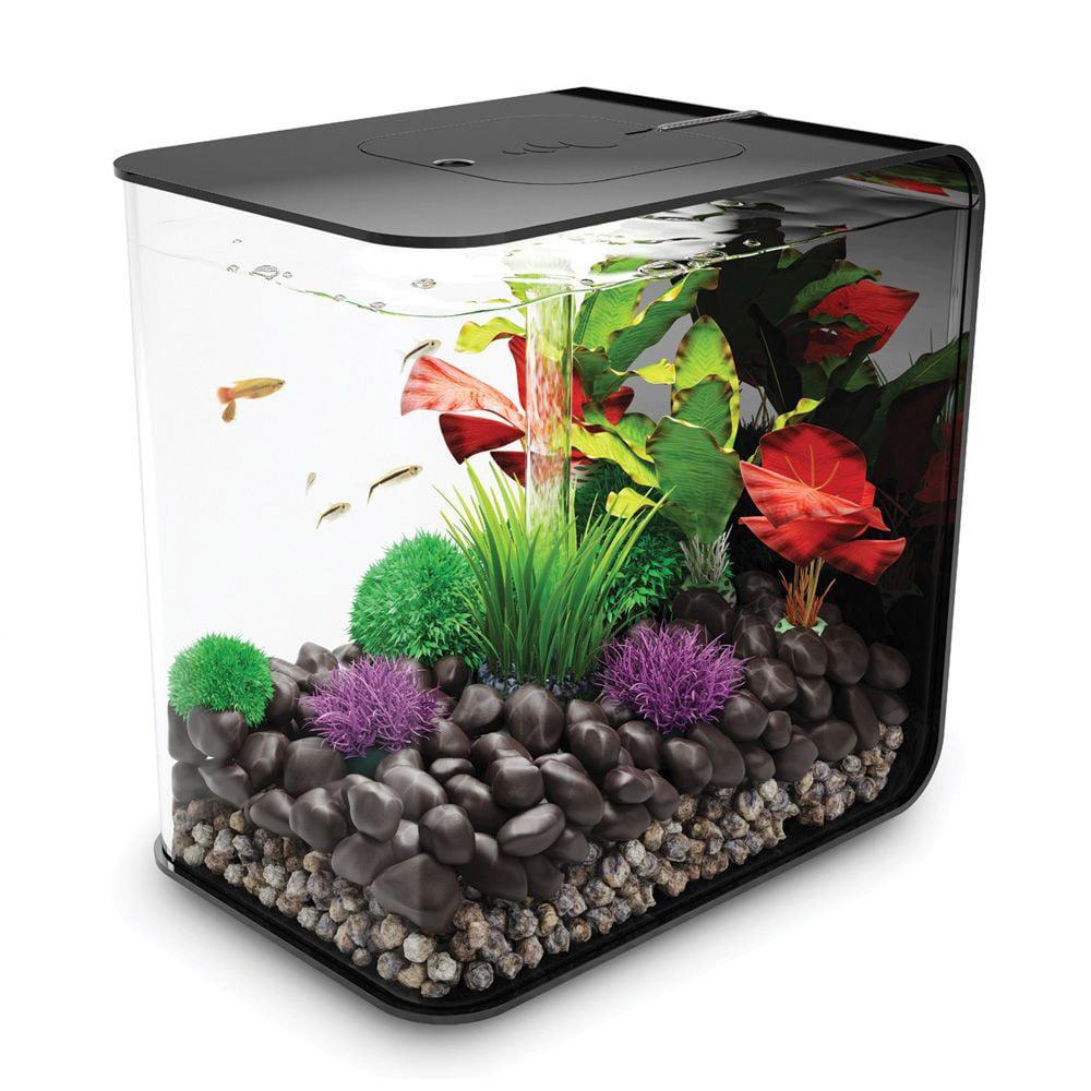 Biorb flow aquarium the green head for Poisson rouge aquarium 10l