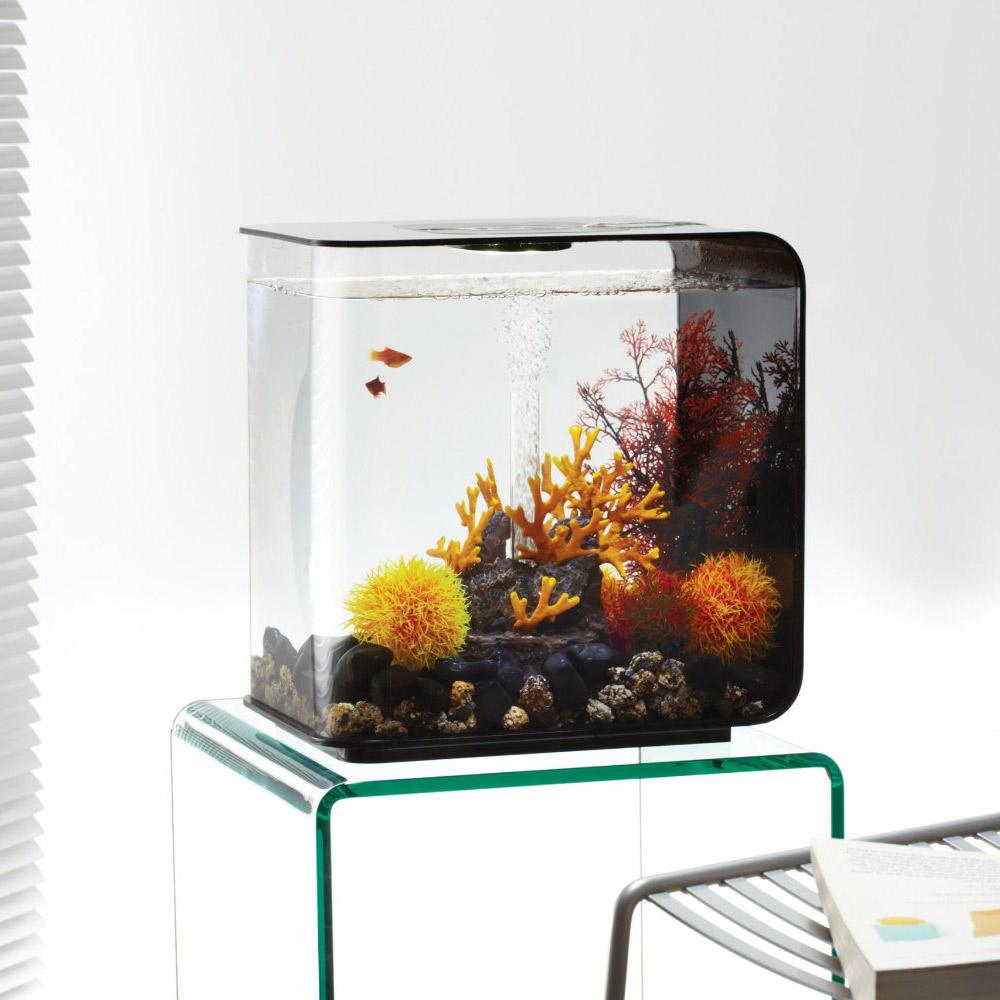 Biorb Flow Aquarium - The Green Head