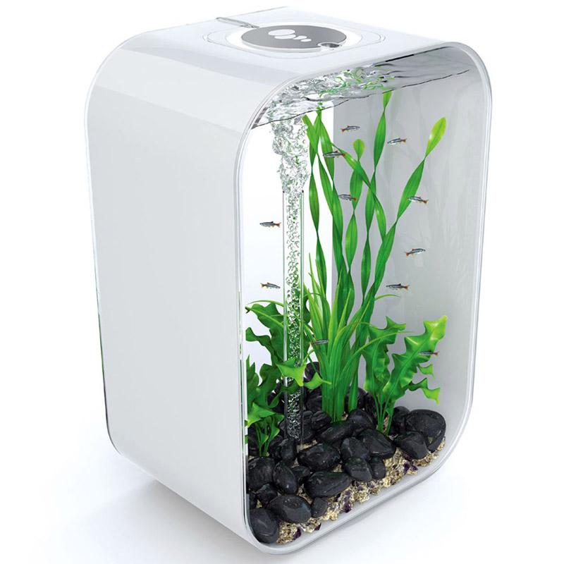 biorb life aquarium the green head. Black Bedroom Furniture Sets. Home Design Ideas