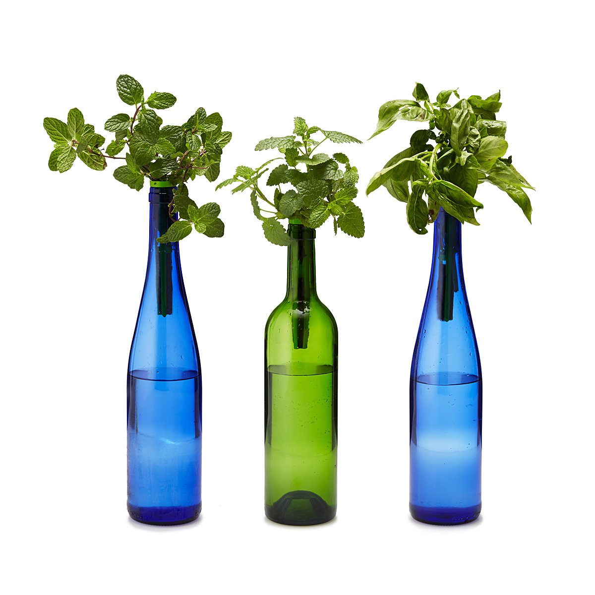 Bottle Stopper Hydroponic Herb Garden Kit The Green Head