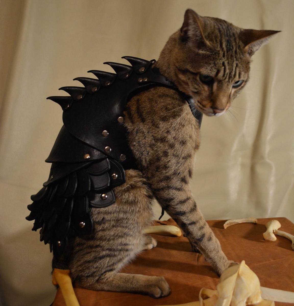 Cat: Cat Battle Armor