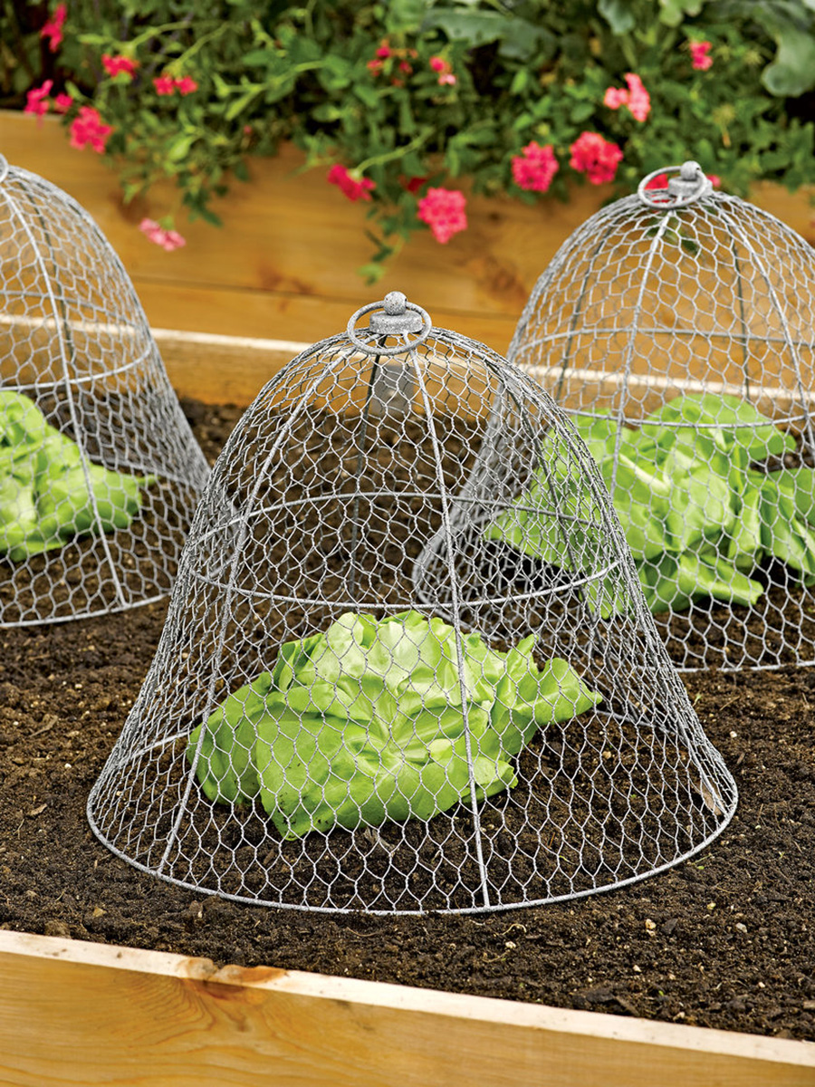 Chicken wire plant cloche the green head for How to maintain garden plants
