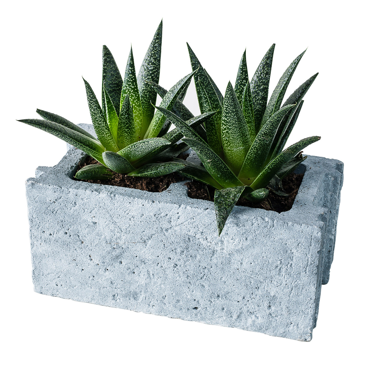 Cinder Block Cement Planter The Green Head