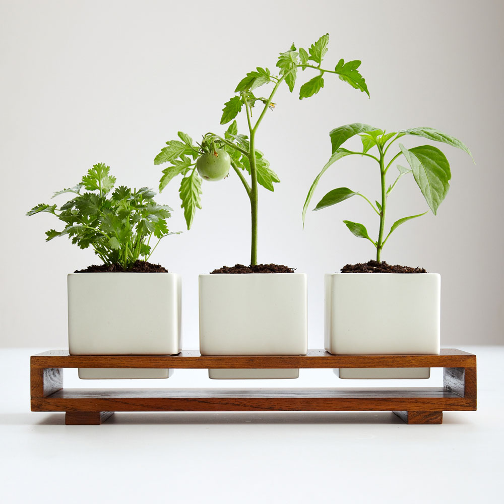 Kitchen Window Herb Planter: Culinary Salsa Growing Kit