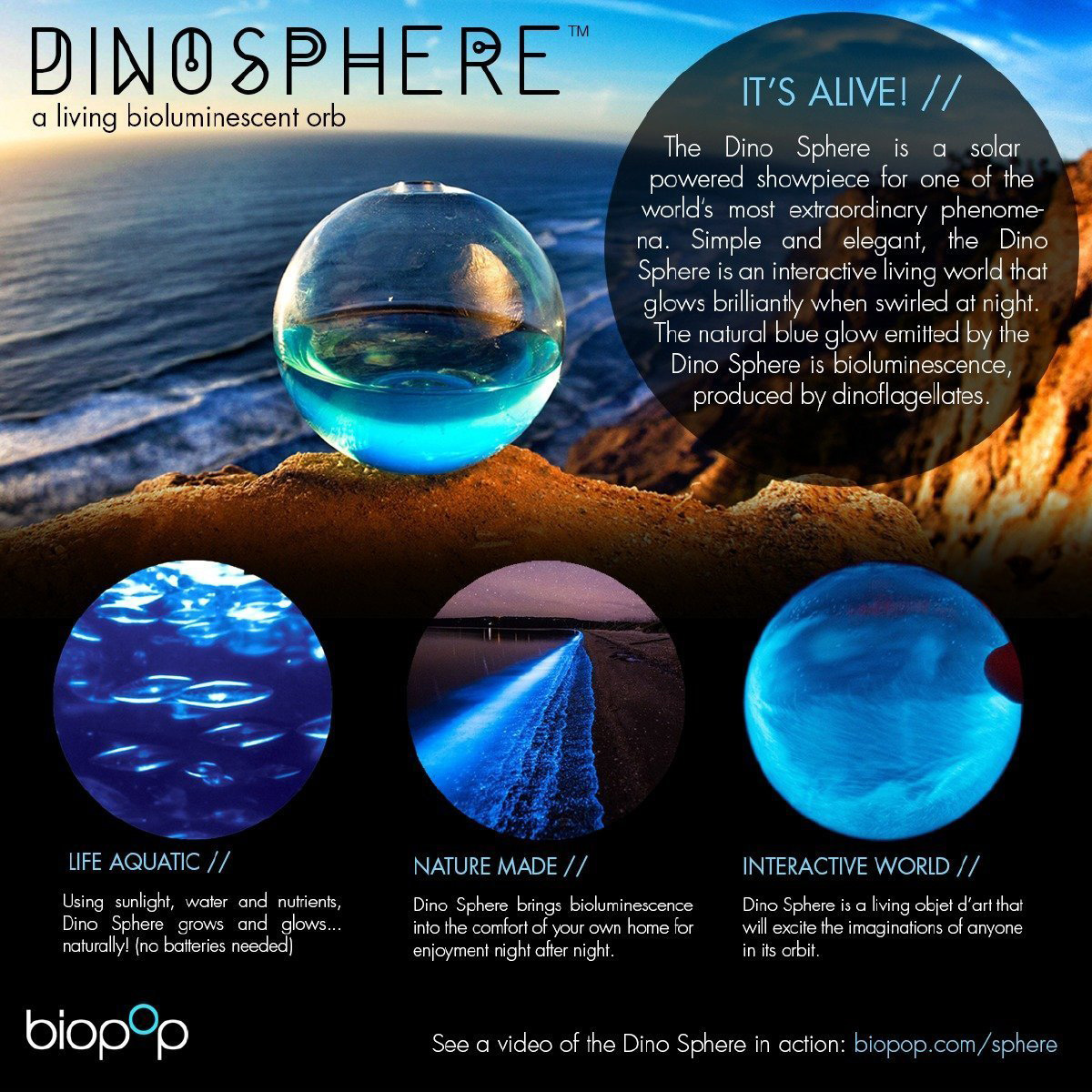 Dino Sphere Bioluminescent Plankton Mini Aquarium
