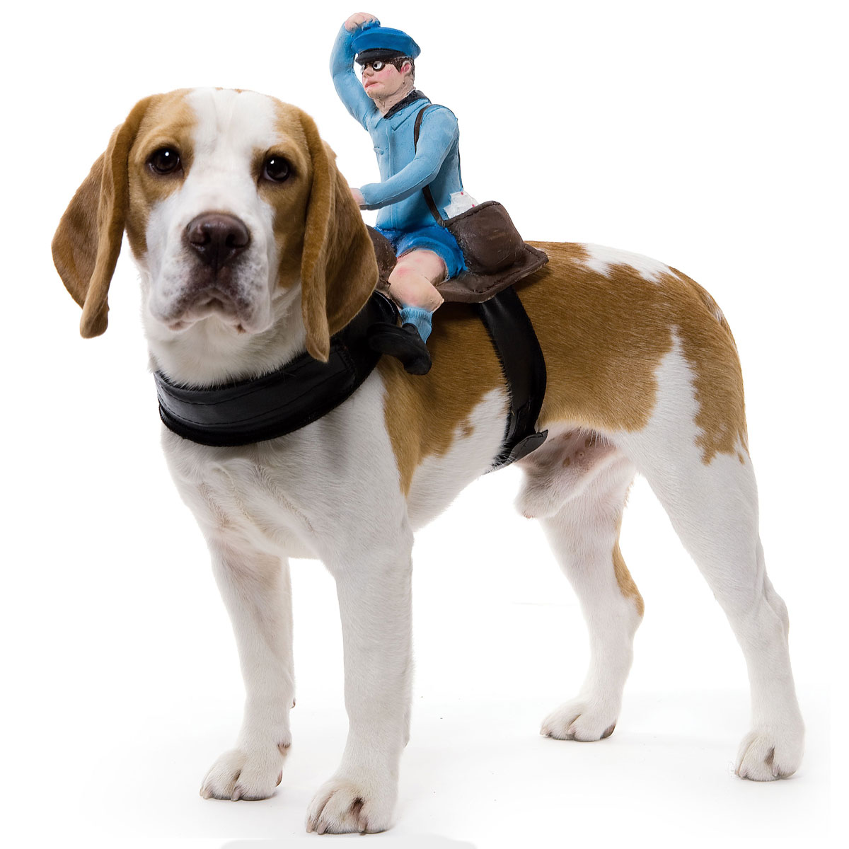 Dog Riders Pet Costumes  sc 1 st  The Green Head & Dog Riders Pet Costumes - The Green Head