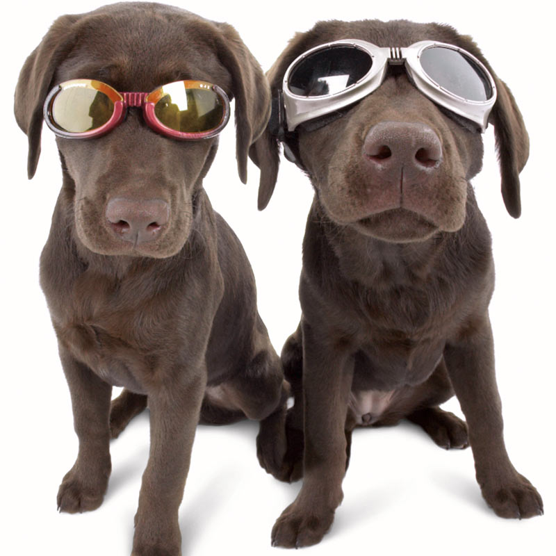 Doggles Stylish Protective Eyewear For Dogs The Green Head