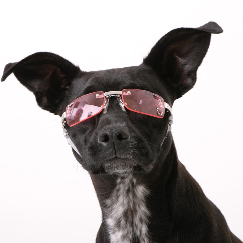 Doggles - Stylish Protective Eyewear for Dogs Funny Cat And Dog Pictures Together