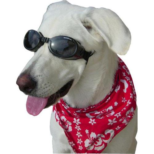 Doggles Stylish Protective Eyewear For Dogs