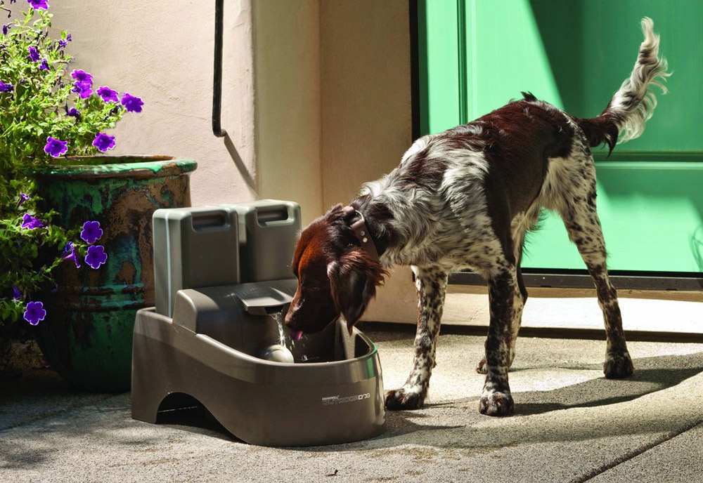 Drinkwell Outdoor Dog Fountain The Green Head