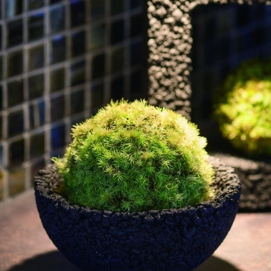 eco pochi kokedama moss ball pot. Black Bedroom Furniture Sets. Home Design Ideas