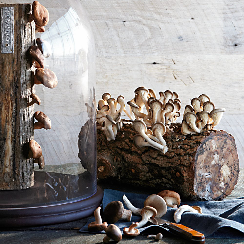 Edible Mushroom Log Glass Cloche Protects And Showcases The Green Head