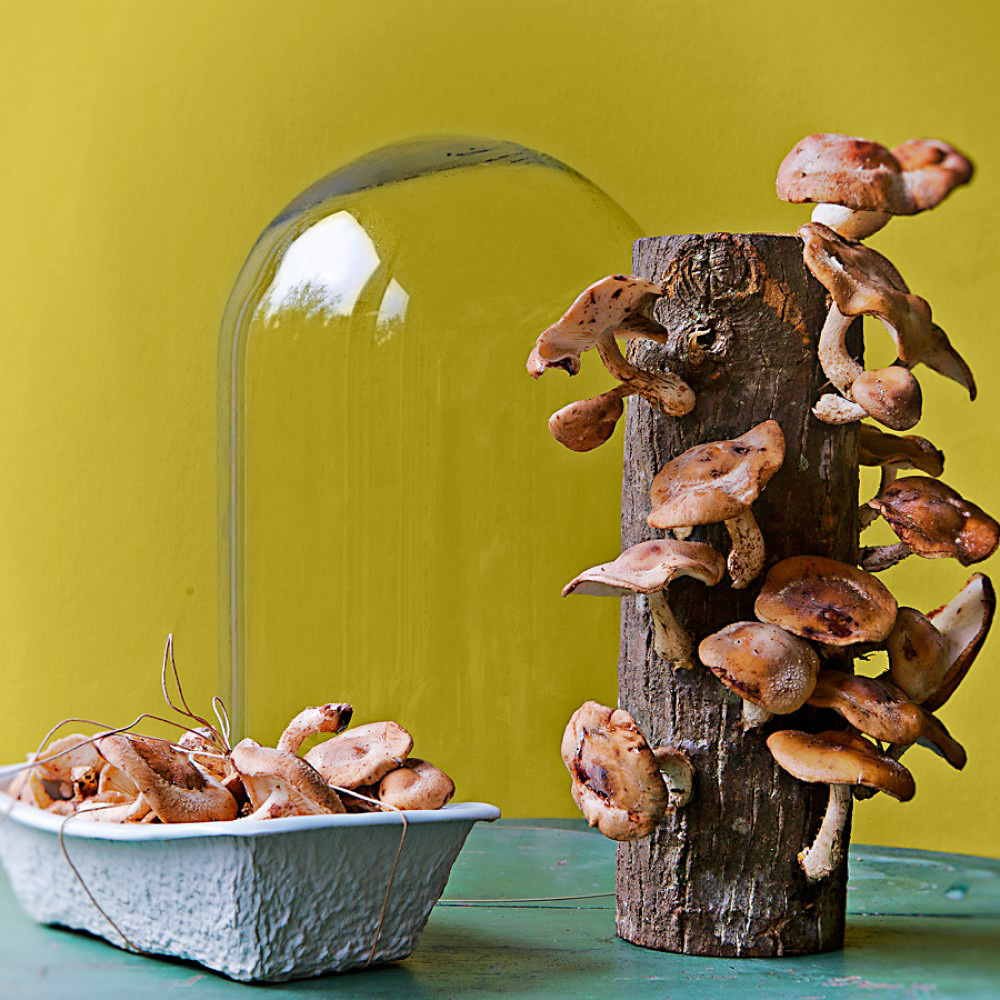 Edible Mushroom Log Glass Cloche - Protects and Showcases - The ...