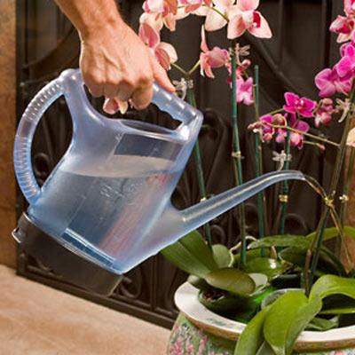 Enki Oxygenating Watering Can The Green Head