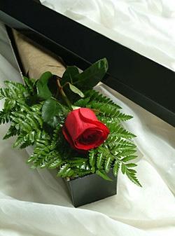 Extraordinary 4 Foot Single Stem Rose The Green Head
