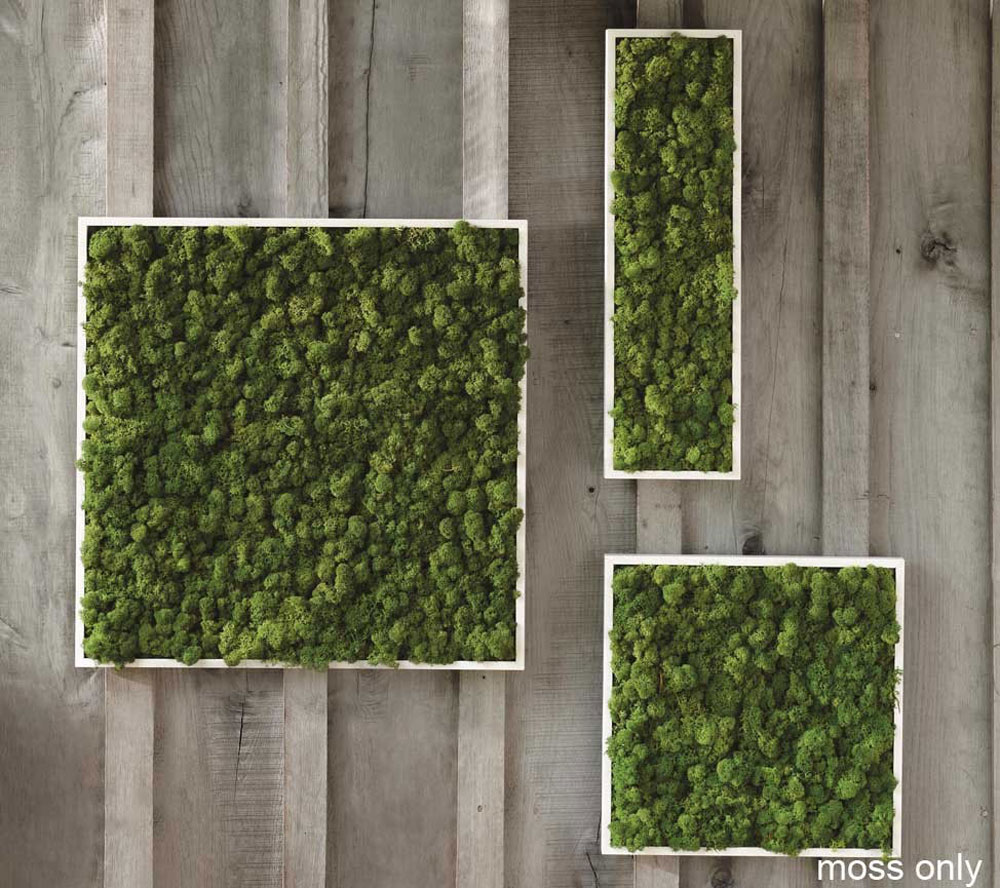 fern and moss wall art the green head. Black Bedroom Furniture Sets. Home Design Ideas