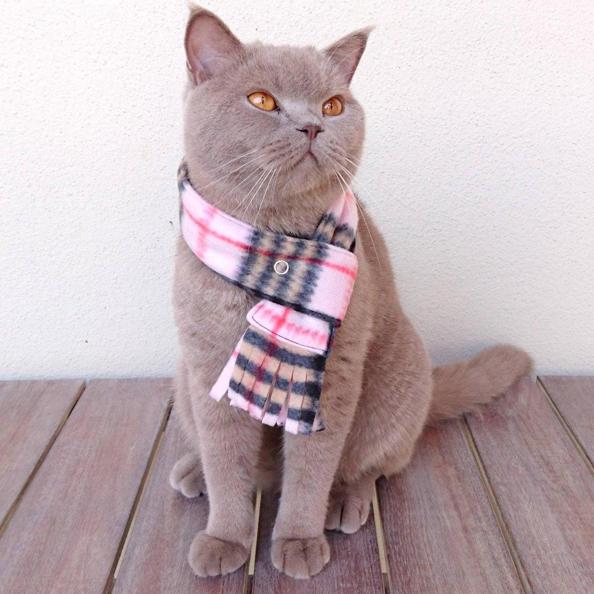 Chillin Cat Aqua Warm Fleece Scarf