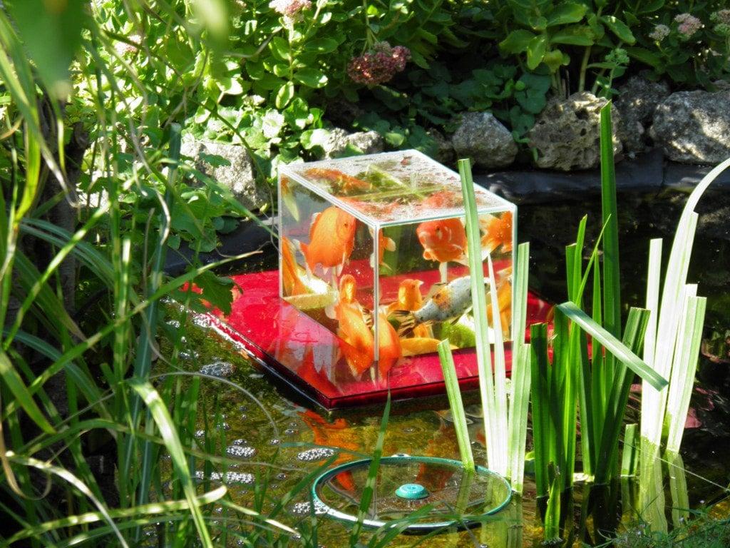 Flying Aquarium Above The Water Floating Koi Goldfish