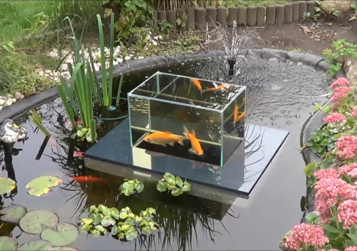 Flying aquarium above the water floating koi goldfish Setting up fish pond