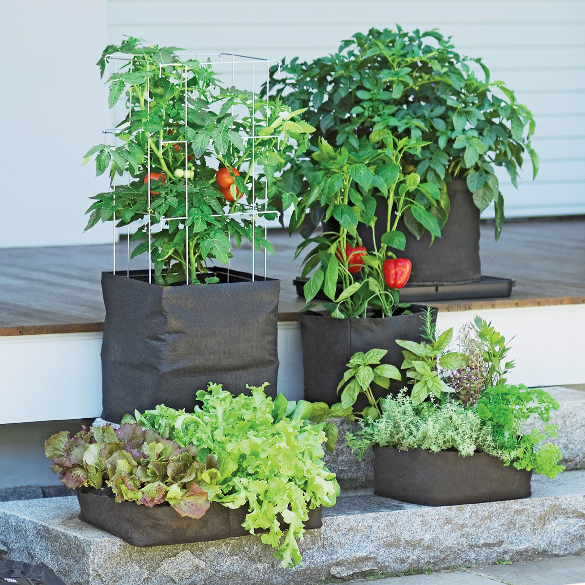 Grow bags tomatoes peppers herbs and potatoes the - Planter tomates cerises en pot ...