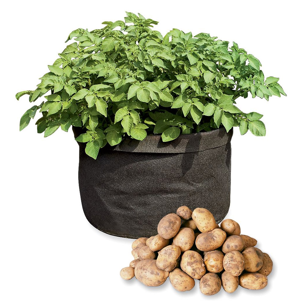 grow bags tomatoes peppers herbs and potatoes the
