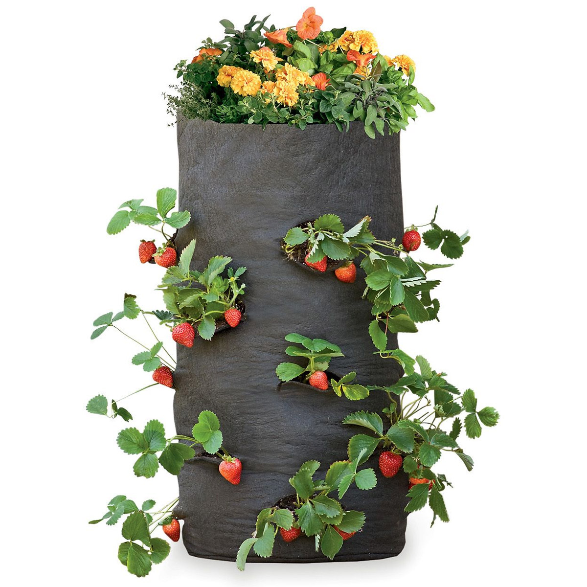 Grow Bags Tomatoes Peppers Herbs And Potatoes