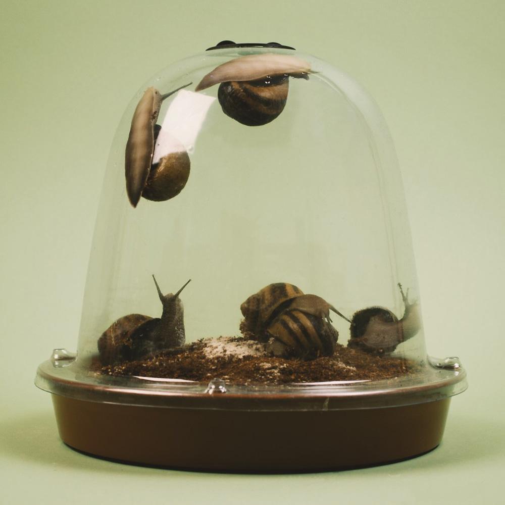 Grow Your Own Escargot Snails The Green Head