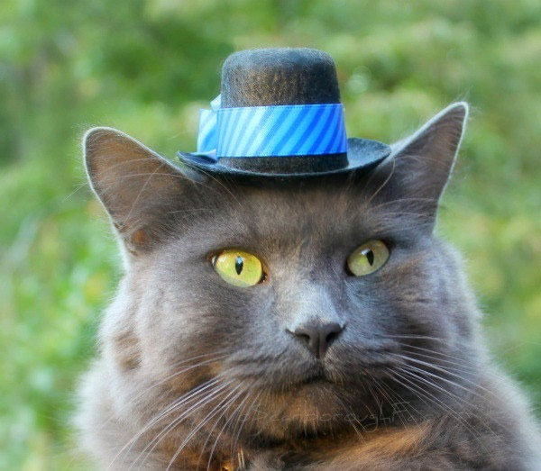 Der Kater Mit Hut