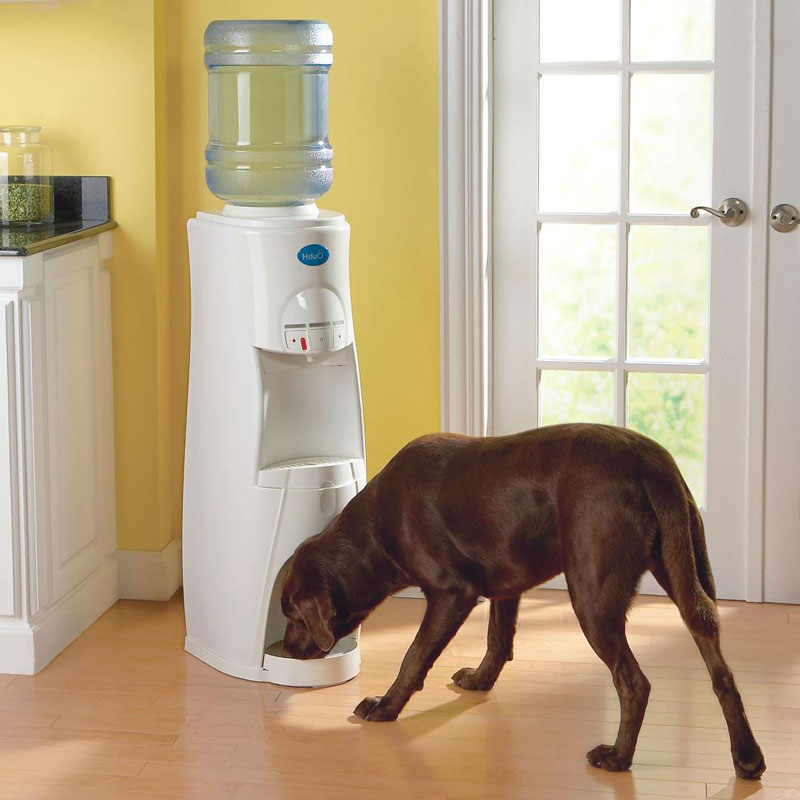 Hot And Cold Filtered Water Dispenser HduO - Water Dispenser for People and Pets - The Green Head