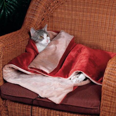 Heated Cat Blanket The Green Head