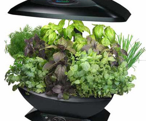 AeroGarden - Automated Indoor Kitchen Garden
