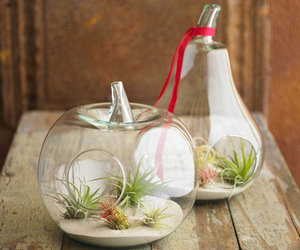 Air Plant Terrariums