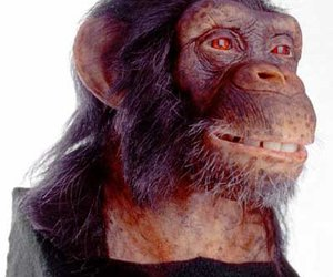 Alive Chimpanzee by WowWee - Animatronic Life-Size Bust with Video