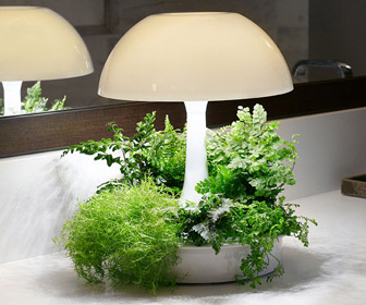 Ambienta Living Table Lamp