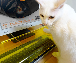 Anti-Cat Keyboard Cover