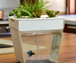 AquaFarm - Aquaponic Garden and Self-Cleaning Aquarium