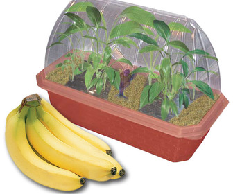 Banana Farm Greenhouse - Grow Bananas Right on Your Desk!