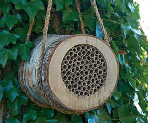 Birch Bee Log