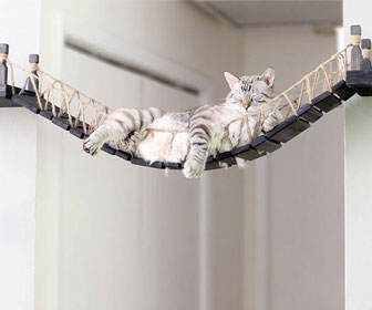 Cat Rope Bridge