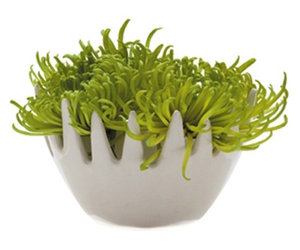 Chive Gideon Fuzzy Vase - Ceramic Air Plant and Bud Vase