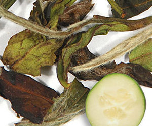Cucumber White Tea