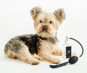 Dog Perfume and Cologne