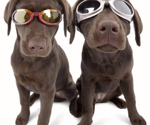Doggles - Stylish Protective Eyewear for Dogs